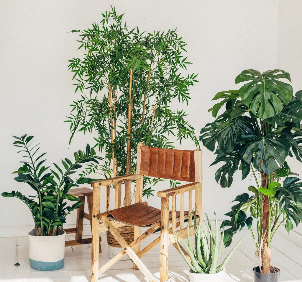 indoor-purifying-plants